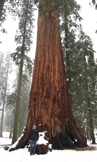 Tom Fowler with redwood tree